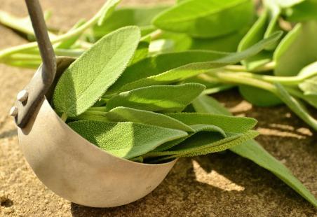 medicinal-plants-sage