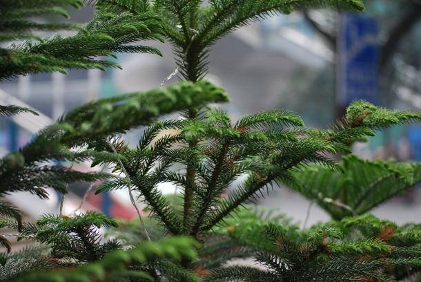 tree-17006_1920