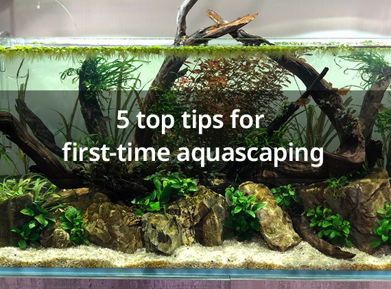 5 Top Tips For First Time Aquascaping The Plant Based Podcast