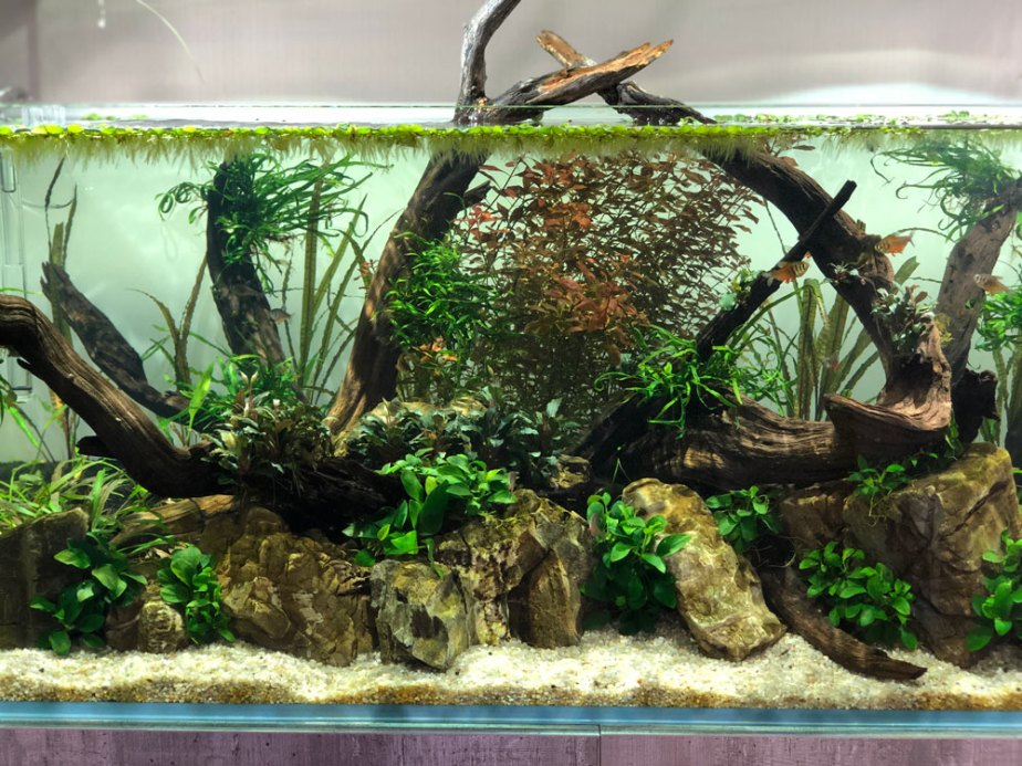 aquascaping-3
