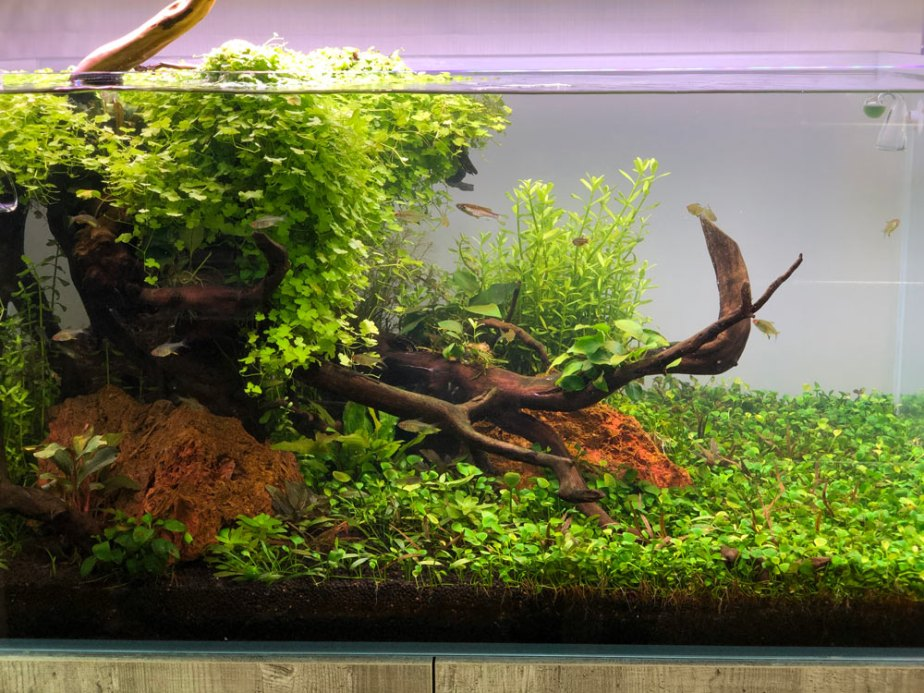 aquascaping-6