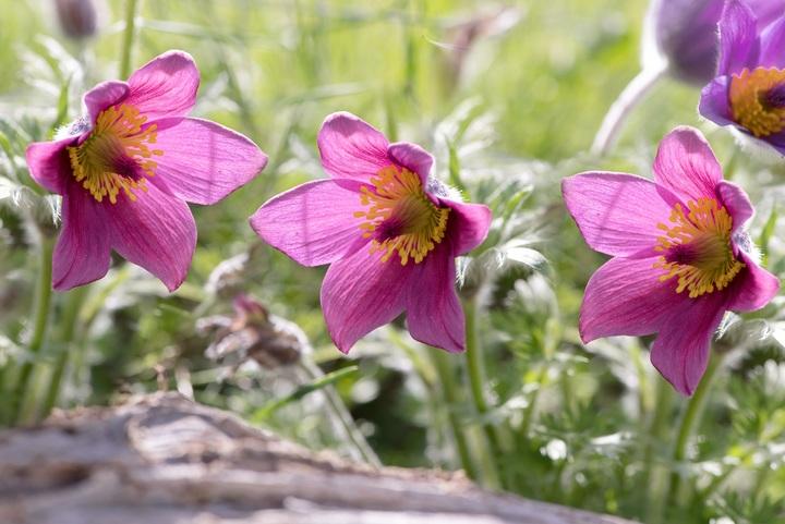 nature-blossom-plant-flower-purple-petal-632969-pxhere.com