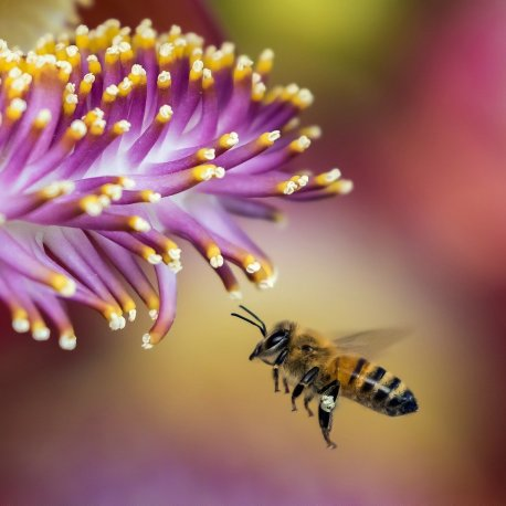 bee-flower-close-up