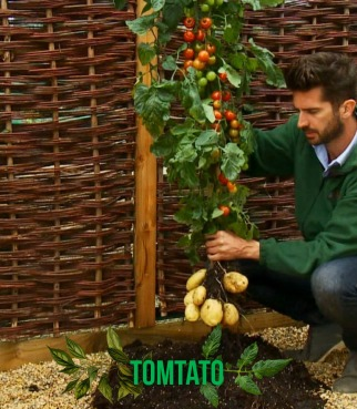 tomtato-captioned
