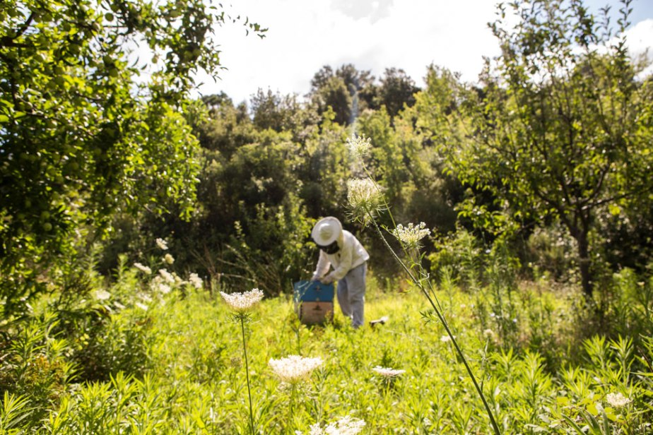 career-in-horticulture-4