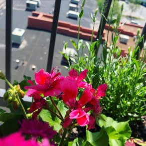 balcony-and-windowsill-gardening-3