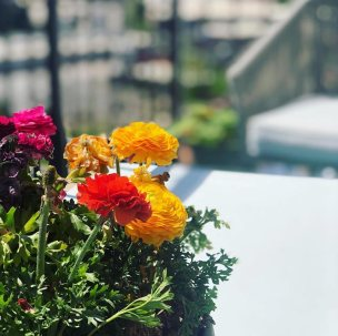 balcony-and-windowsill-gardening-5