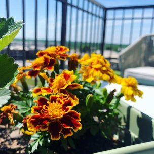 balcony-and-windowsill-gardening-6
