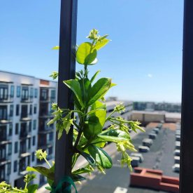 balcony-and-windowsill-gardening-7
