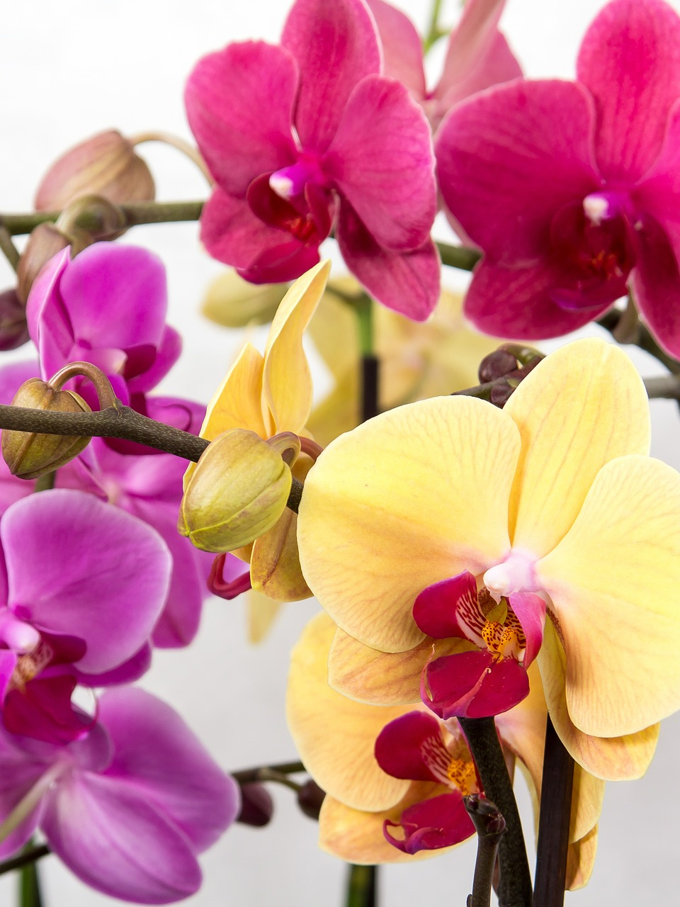 orchid-564125_1280