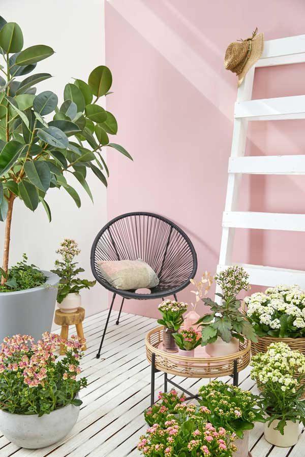 Houseplants-home,-credit-Flower-Council-of-Holland